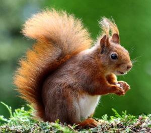 huisje in het bos wonen marleen hartog introvert eekhoorn